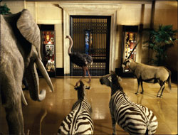 Night At The Museum African Mammals Pictures To Pin On