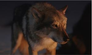 MPC Character Lab 'Goes to the Wolves'