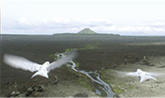 Birds of Paradise   Computer Graphics World