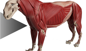 Automated Anatomy Transfers Now in Ziva VFX 1.6