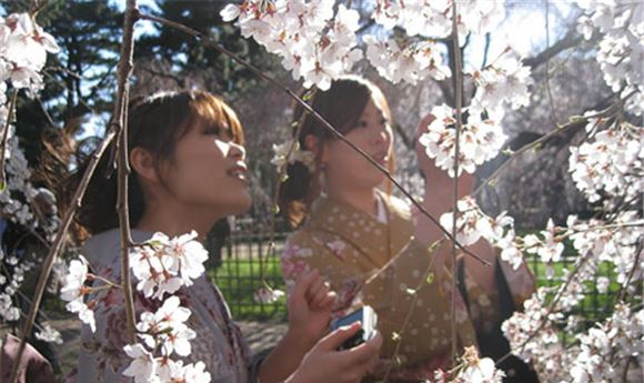 Picture Head Readies 'The Tsunami And The Cherry Blossom'