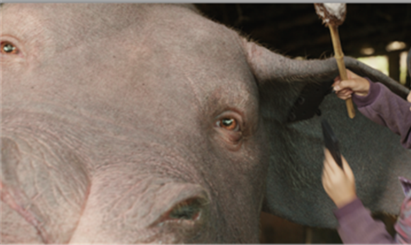 Bringing 'Okja' to Cinematic Life
